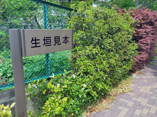 150429生け垣見本1.jpg